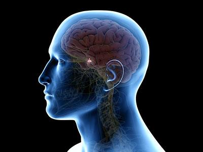 pituitary_gland_sm.jpg